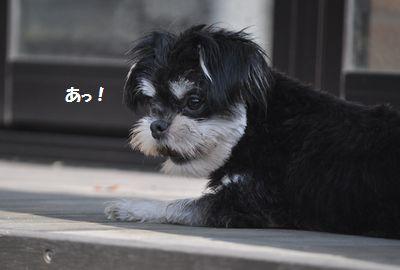DSC_0093_2014102918191377d.jpg