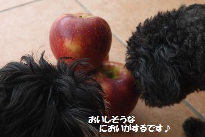 P1200464.jpg