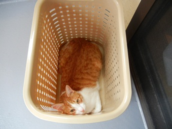 洗濯かごニャンコ