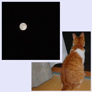 catmoon.jpg