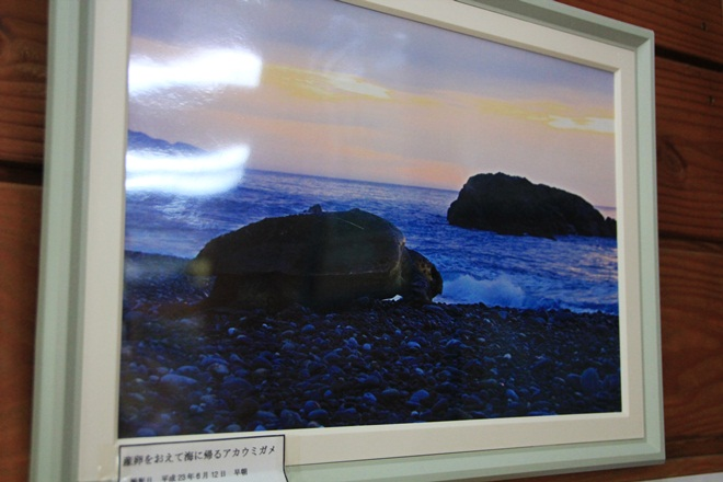 IMG_0611-20121211-004830.jpg
