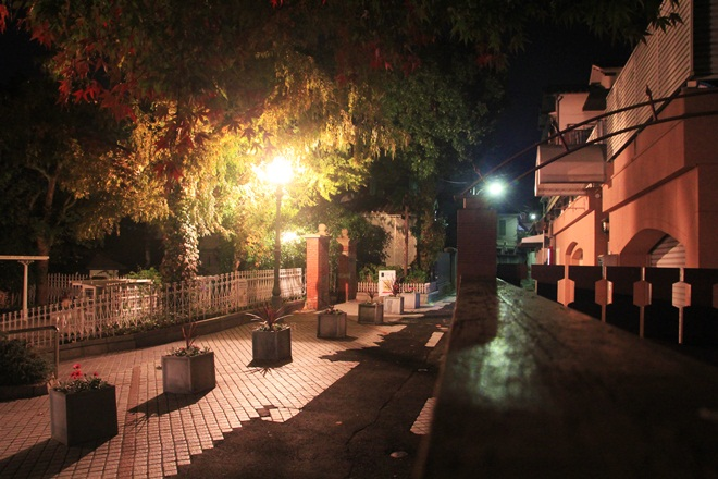 IMG_8441-20121120-092224.jpg