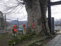 H240423前山寺参道の巨木