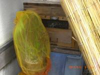 H240506待ち巣に金稜辺を設置