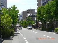 H240513昭和通権堂前付近の新緑