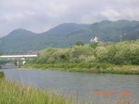 H240526ニセアカシアの咲く犀川土手