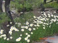 H240528再び花の季節
