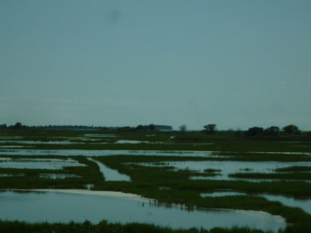 assateague marsh