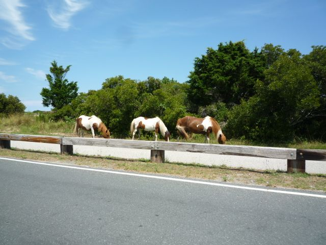 horses along the road