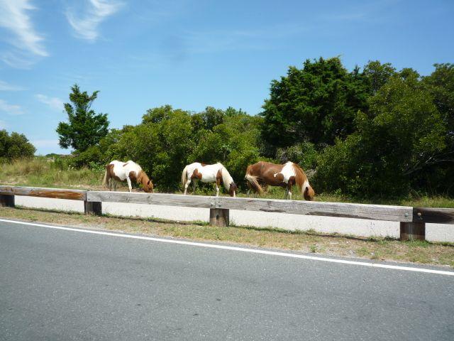 horses along the road