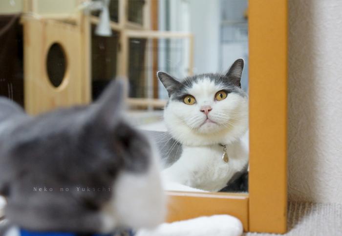鏡ごっしパチリ