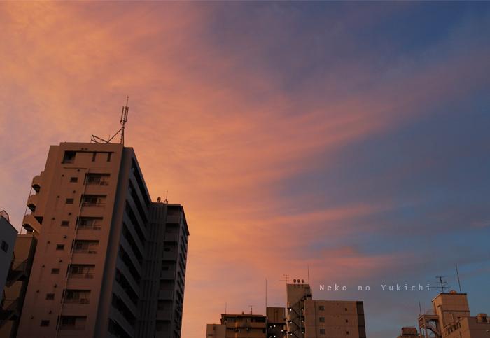 朝の赤の夕の雨
