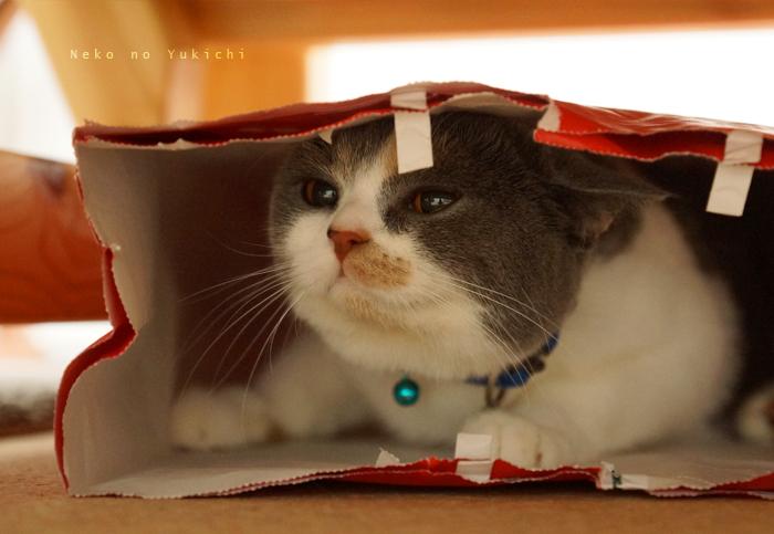 袋のねずみのねこ