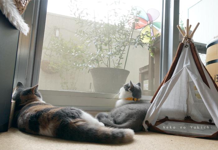 2匹で窓辺