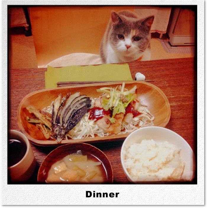 食と毛糸とちょっと猫