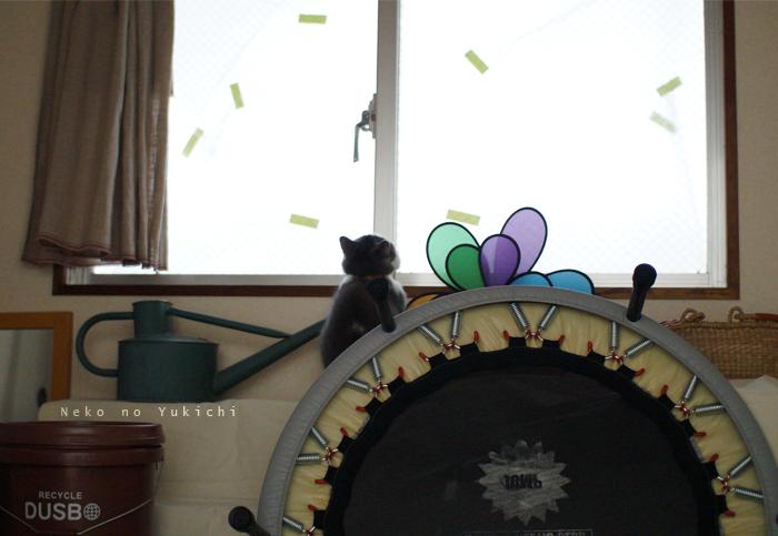 窓にペタペタ