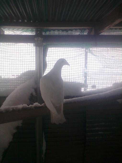 パーちゃん写真2012120902