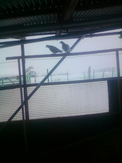 シー君写真20121220