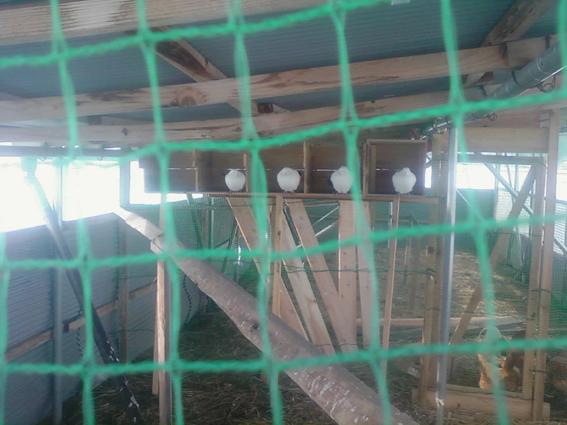 パーちゃん写真20121231