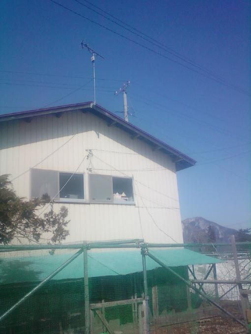クーちゃん写真201303131601