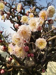 flower20133.jpg