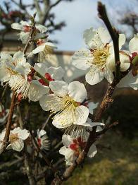 flower201332.jpg