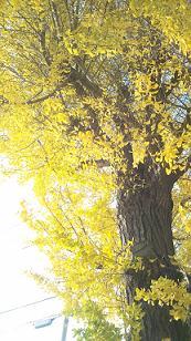 kouyou20121.jpg