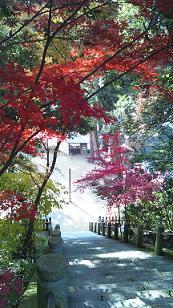 kouyou20123.jpg