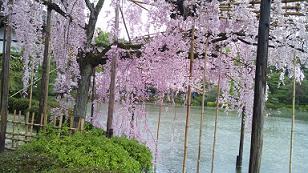 kyoto201346.jpg