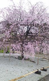 kyoto201348.jpg