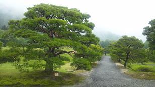 kyoto201356.jpg