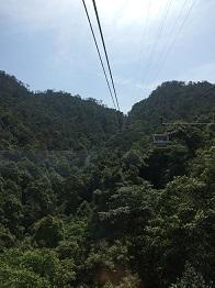 miyajima29.jpg