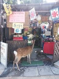miyajima32.jpg
