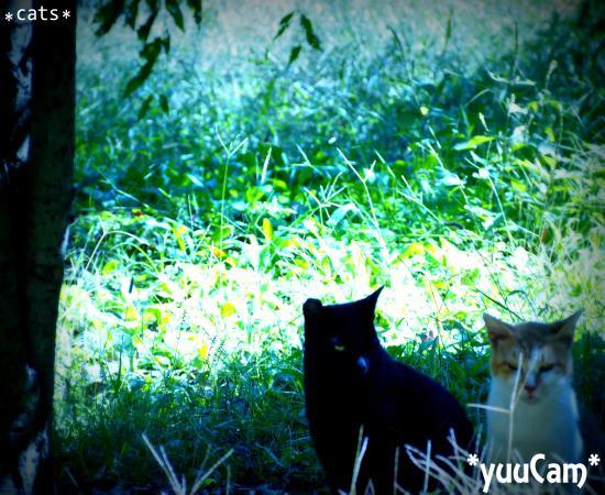 PEN2012101307_convert_20121013132234.jpg