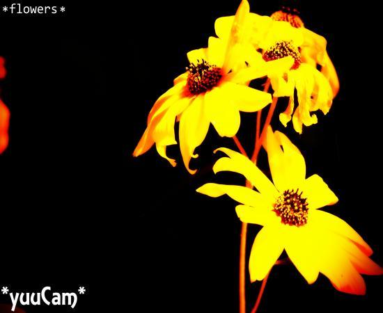 PEN2012101380_convert_20121014222932.jpg