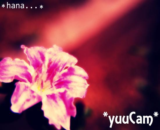 vivi2012100636_convert_20121107190354.jpg