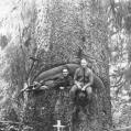 1917  oregon
