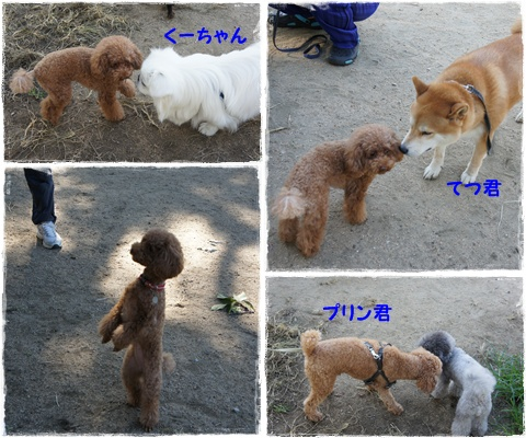cats2_20120831181434.jpg