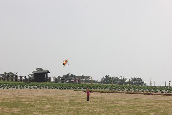 くじゅう花公園03