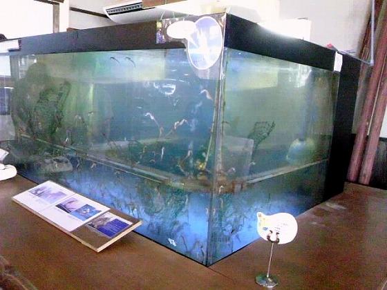 タツノオトシゴハウス水槽