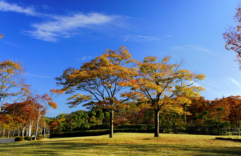 太陽が丘公園01