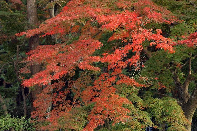 秋景(興聖寺)05