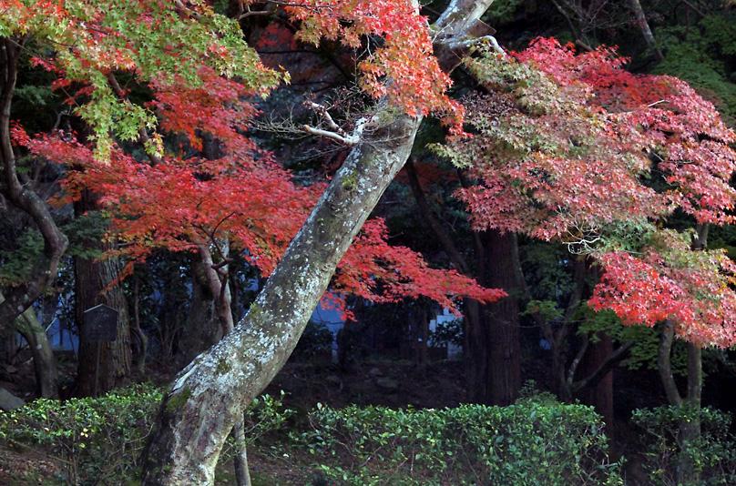 秋景(興聖寺)06