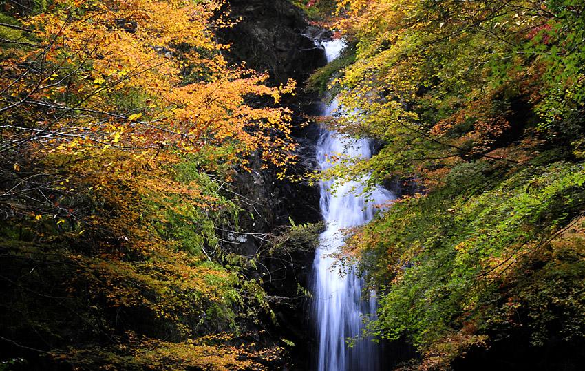 261123白藤の滝03