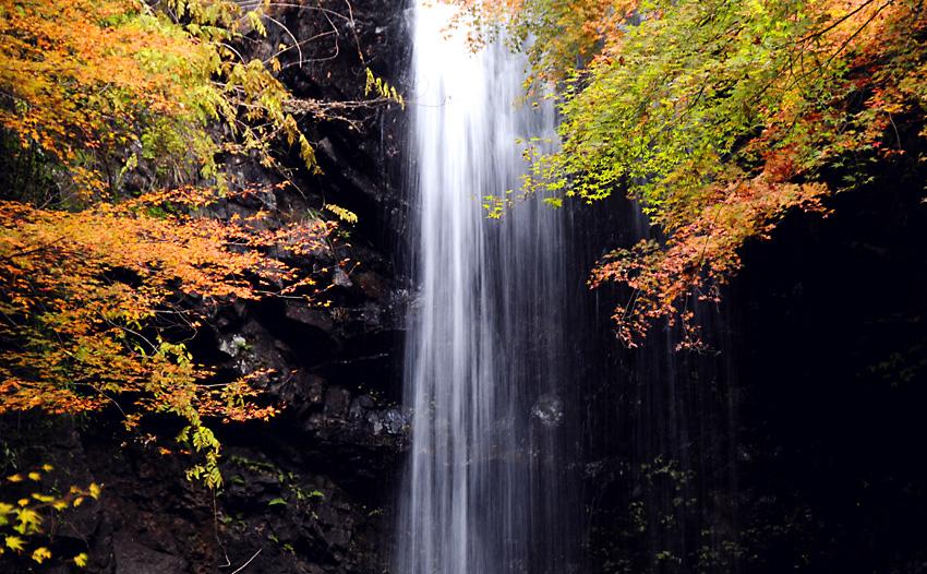 261123白藤の滝05