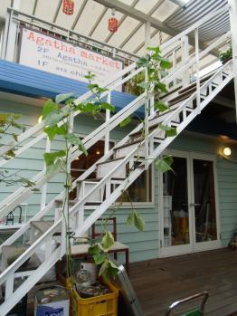 blog_kyuuri6_convert_20121002162726.jpg