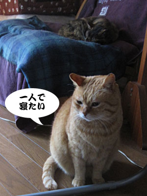 14_02_09_4.jpg