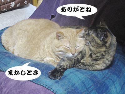 14_02_12_4.jpg