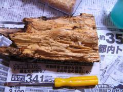某産地オオクワ使用天然カワラ材