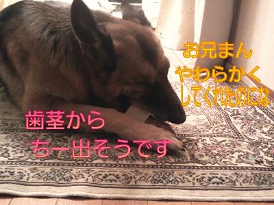 fc2blog_20121212203601f6f.jpg